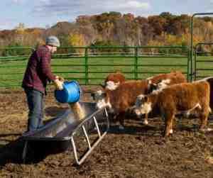 Jobs auf Farmen und Plantagen werden häufig auf backpackerboard angeboten oder durch Hostels vermittelt